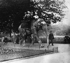Un elefante con niños en el zoo de Regent´s Park en 1900