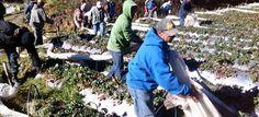 Protegido por militares Ministerio de Medio Ambiente inicia desmonte instalaciones regadio agrícolas Valle Nuevo