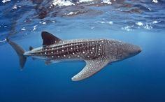 jerks(the people not the sharks) World's Biggest Shark Slaughterhouse Exposed