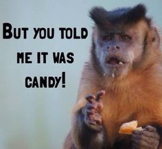 Monkey Meme #Candy, #Told