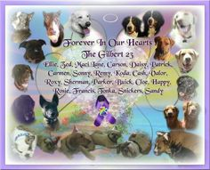 Portrait of the dogs that were lost....all are represented by name