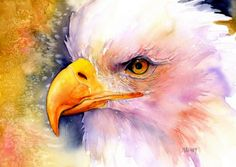 Watercolor Art of Alaska by Alaskan artist Maida Kelley Warms the Soul. Bold Eagle, Eagle Painting, Visit Alaska, Eagles, Watercolor Paintings, Bird, Artist, Animals, Vintage