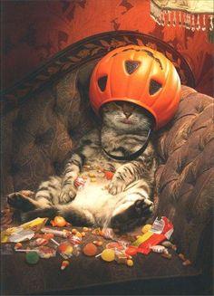 Halloween Greeting Card - Cat Under Candy Bucket