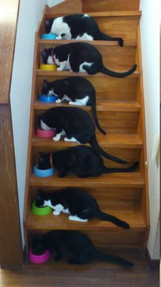 din-din!  love this photo :)  sort of looks like our house (2 black kittehs, 3 tuxies and 1 dark tabby)  <3 <3 <3 <3 <3 <3