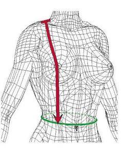 Vordere Taillenlänge