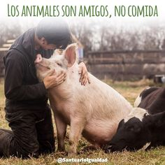 Amigos no comida! Comparte si estás de acuerdo!  - - #animal #animallovers #animals #friendsnotfood #nature #farm #farmlife #farmanimals #crueltyfree #photooftheday # #pig #piglet #pigs #pigsofinstagram #love #cute #happy #adorable #toocute #friend #bestfriend #bff #bestfriendsforever #friendshipgoals  #carer #caretaker #caregiver #family #familytime