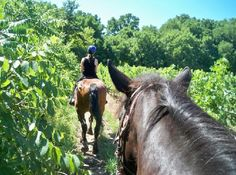 Niagara Riding Stables, Niagara On the Lake.  Great in the summer/fall. My horse was a gentle giant named King . :)