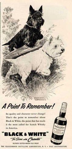 Black & White Scottish Terrier Hunting Dennis (1957