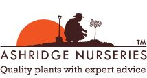 Ashridge Nurseries - Bareroot Plant for Coasts as well as potted versions