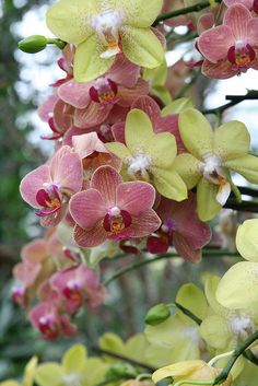 Orchids at the Royal Botanic Gardens in Kew