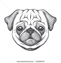 Cute pug. Portrait of dog in sketch style. Hand drawn vector illustration. Black…