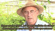 """Según un estudio publicado en la revista """"Life Science"""", la artemisinina, un derivado de la planta del ajenjo ( Artemisia annua ), ampliamente utilizada en la medicina china, puede matar el 98% de las células de cáncer de pulmón en menos de 16 horas. La hierba sola utilizada reduce las células de …"""