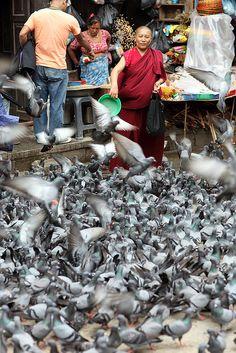 Pigeon feed . Kathmandu, Nepal