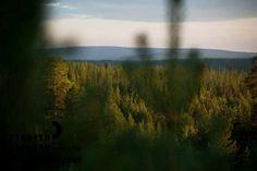 Forests in Käyrämö, Rovaniemi in Finnish Lapland. Photo by Jani Kärppä. #filmlapland #arcticshooting #finlandlapland