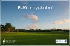 We always work hard to make sure the grass at Mayakoba Golf Course, El Camaleón really is greener when you #PLAYmayakoba!