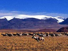 Hoh Xil Nature Reserve - A place not to visit but maybe a view from the Qinghai-Tibet train.