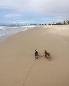 Captain and banshee loving the sunshine! Too much rain is booooring! #kassiesdogwalkingandpetsitting