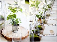 Dome terranium centerpieces like this would be beautiful and unexpected on the cocktail tables