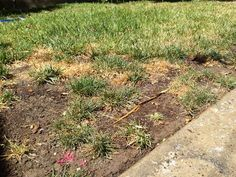 how to bring back dead grass from dog urine