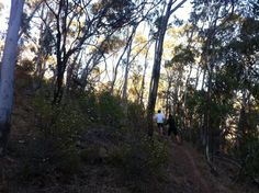 Little-known outside of running circles, the Yurrebilla Ultra-Marathon is one of the most punishing races in Australia, attracting world…
