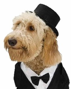 Top Hat Formal Black Cute Fancy Dress Up Halloween Pet Dog Cat Costume Accessory #Rubies