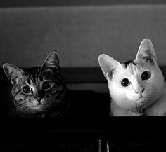 Puchi & Chiro These guys look like my cats Max & Bella