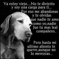 Awwww que triste me partio mi corazon😭😭😭😭😭😭😭😭😭😭😭😭😭😭😭😭😭😭😭😭😭 Animals And Pets, Baby Animals, Cute Animals, I Love Dogs, Cute Dogs, Dog Phrases, Dog Friends, Best Friends, Stop Animal Cruelty