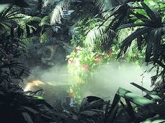 rain forest - Google Search