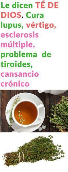 Descubre por qué Le dicen el TÉ DE DIOS a esta infusión a base de tomillo: cura viva la artritis, problema de tiroides, lupus, vértigo, esclerosis múltiple y cansancio crónico