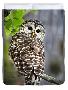 Barred Owl Duvet Cover by Christina Rollo