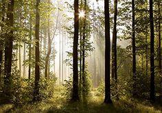 Vlies Fototapete 'Wald' 352x250 cm - 9010011a RUNA Tapete…