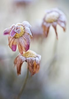 Frosty | by Mandy Disher