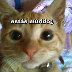 Funny Spanish Memes, Stupid Funny Memes, Meme Pictures, Reaction Pictures, Meme Faces, Funny Faces, Pingu Memes, Cute Love Memes, Drama Memes