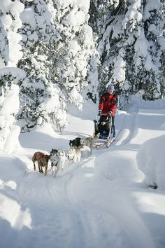 Husky safari in Rovaniemi, Finland by Visit Finland, via Flickr