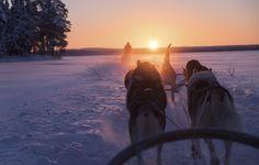 Dog sledding, Finland, Europe