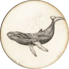 BY TATIANA GOMEZ ZAPATA #illustration #drawing #pencildrawing #whale #sea