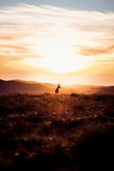sunrise upon edoras 1920x1080