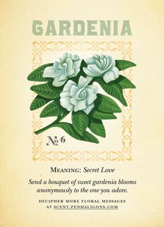 Gardenia... my favorite.