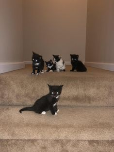 My 1 month old kittens club photo. by eshquia cats kitten catsonweb cute adorable funny sleepy animals nature kitty cutie ca