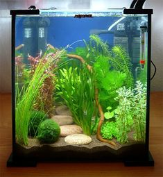 Nice 25 Cool Betta Fish Tank Ideas That Will Inspire You https://meowlogy.com/2017/10/13/25-cool-betta-fish-tank-ideas-will-inspire/ If your tank is small enough it's going to be simple enough to pick this up and dump the water.