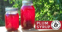 Every year, as summer draws to a close and fall abounds, we have plums coming out our ears! Our favorite way to preserve them? Plum syrup!
