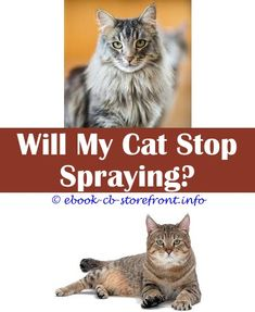 Super Genius Useful Ideas: How To Remove Cat Spray From Clothes calming spray for cats diy.How Does Cat Spraying No More Work my cat from hell cat spraying marking.Hartz Nodor Cat Litter Spray.