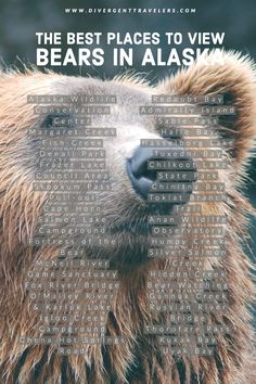 We have put together the ultimate travel guide to viewing bears in Alaska. The best places to view bears in Alaska is just one of the many sections that can be found in our how to plan the ultimate alaska bear camp adventure. Travel Pics, Travel Articles, Usa Travel, Travel Advice, Travel Guides, Travel Around The World, Around The Worlds, Ultimate Travel, Travel And Leisure