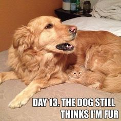 """Day 13. The dog still thinks I'm fur""."
