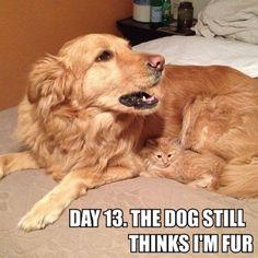 """Day 13. The dog still thinks I'm fur"". Shhh.."