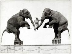 ゾウと人の付き合い100年の変遷、写真16点 | ナショナルジオグラフィック日本版サイト