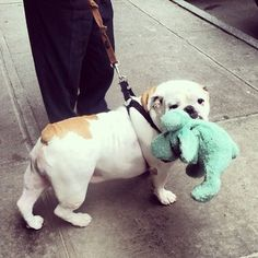 �Don�t be ashamed to carry your favorite stuffed animal around if you need a pick-me-up.� | 16 Tips From Bulldogs To Improve Your Day