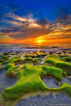 Emerald-Green-Moss-Covered-Rocks-at-Jupiter-Beach-During-Sunrise