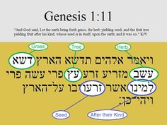Understanding Creation in Hebrew Part 1: The Plants | The Creation Club | A Place for Biblical Creationists to Share and Learn