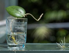 The water propagation method